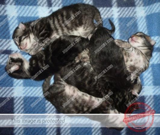 Kitten Cluster!
