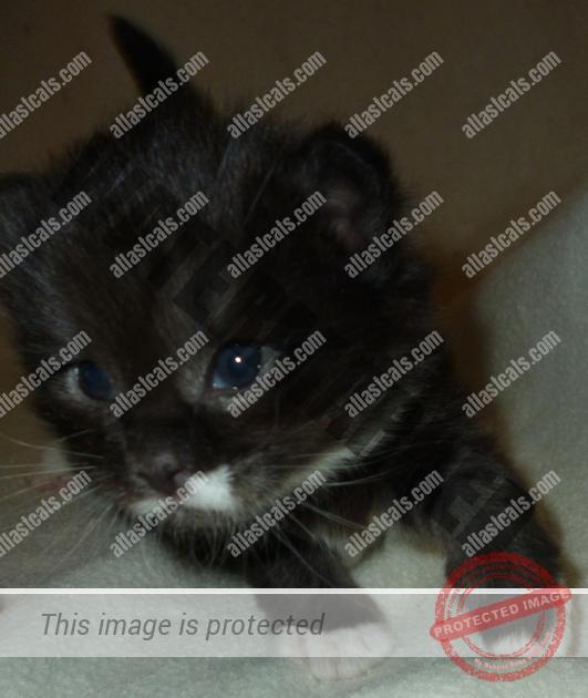 Action Kitten